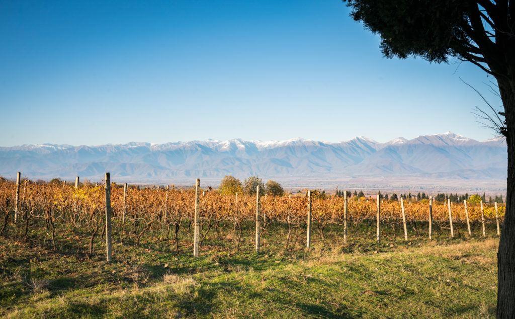 Vines & Mountains of the Alazani Valley (Kakheti) Georgian wine region